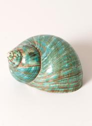 Green Snail Sea Shell